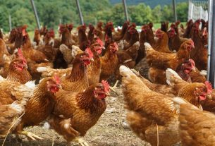 Bird flu victims in the state will be compensated