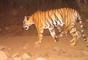 Supreme Court's big decision in Avni tigress poaching case