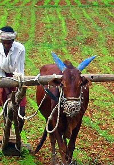 Register before 31st March under PM Kisan Yojana and you will get double benefit