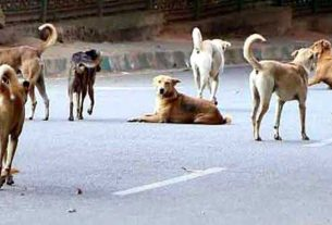 Stray dogs dug up bodies from the cemetery and brought them to the streets