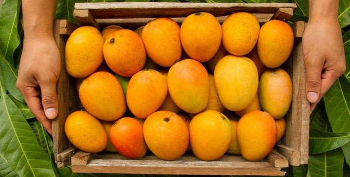 Action Will Be Taken If Other Mangoes Are Sold As Konkan Hapus