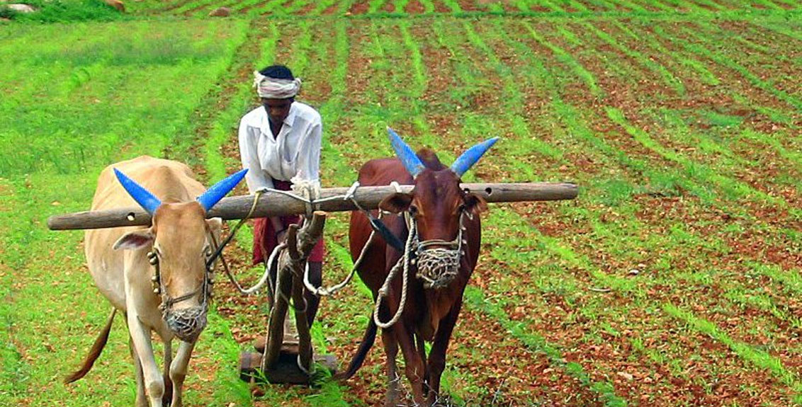 Government Announcement Hike Msp For Kharif Crops 2021-22