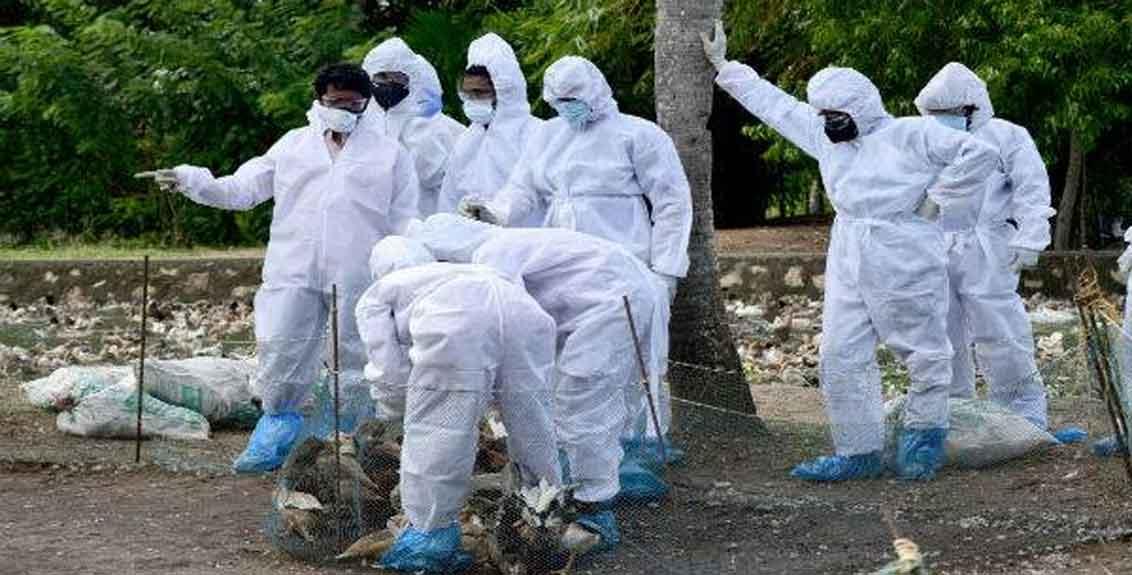 11-year-old dies of bird flu in India