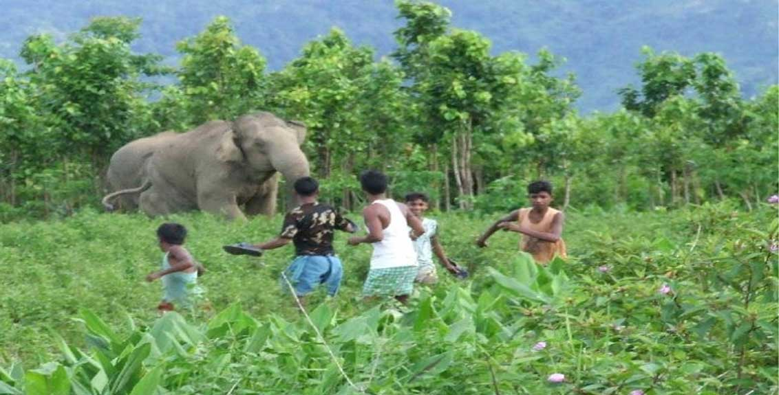 Give priority to measures to prevent human-wildlife conflict