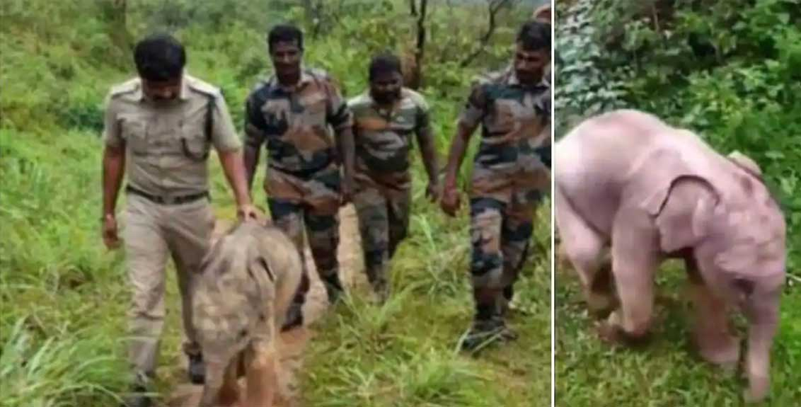 Forest Officers Help Injured Baby Elephant Reunite With Mother