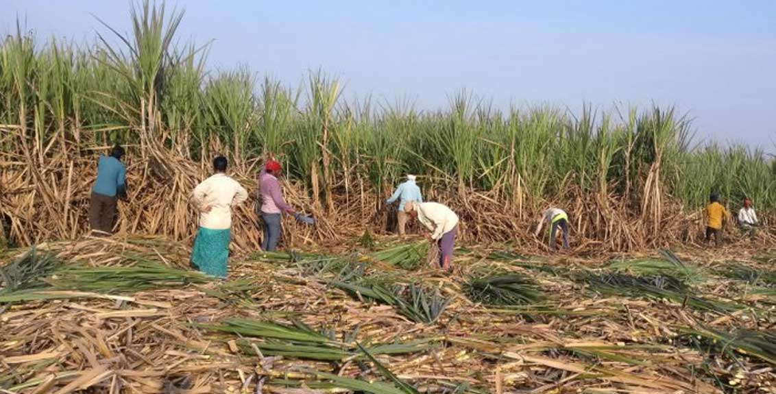 Action will be taken against those who demand money from farmers for sugarcane harvesting